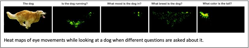 Dog Image 2